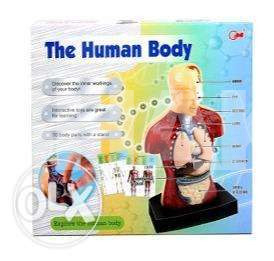 The human body intractable model